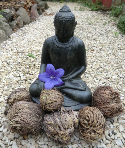 Buddha statue with flower and selaginella lepidophylla in front