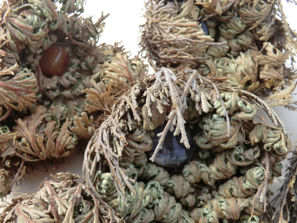 Individual gifts for individual customers - rose of jericho