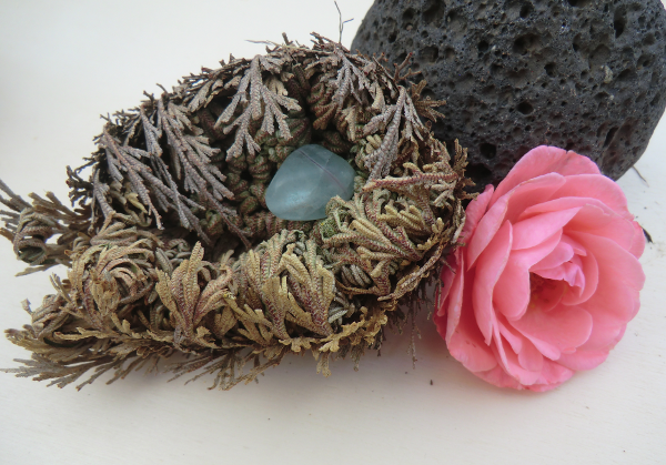Natural art - a gift of nature. The Rose of Jericho.
