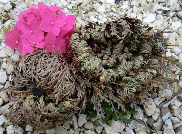 Rose of Jericho with precious stone and flowers