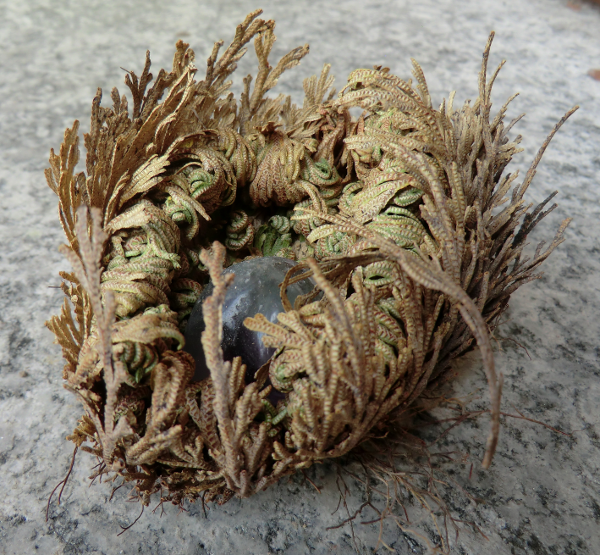 Closing - rose of jericho with grey precious stone